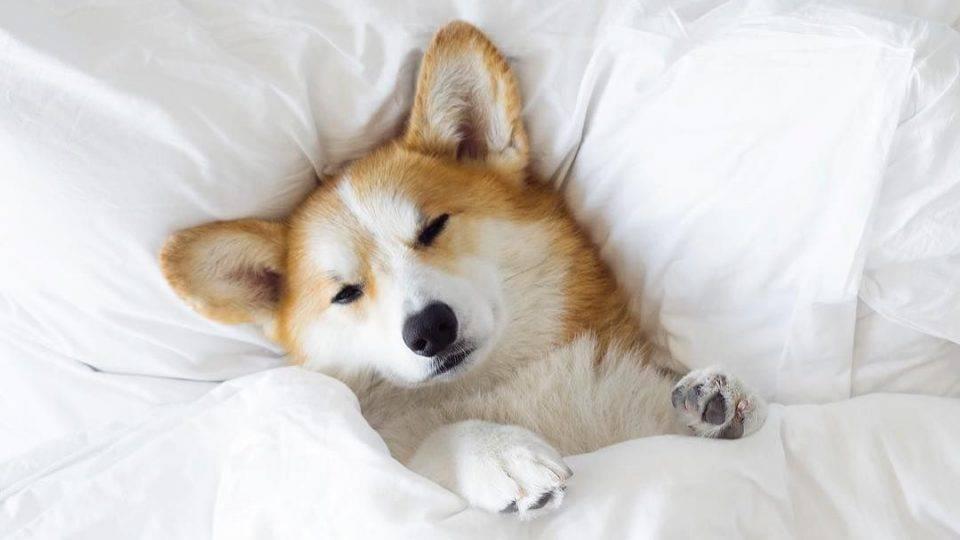Налоги на домашних животных в 2019 году