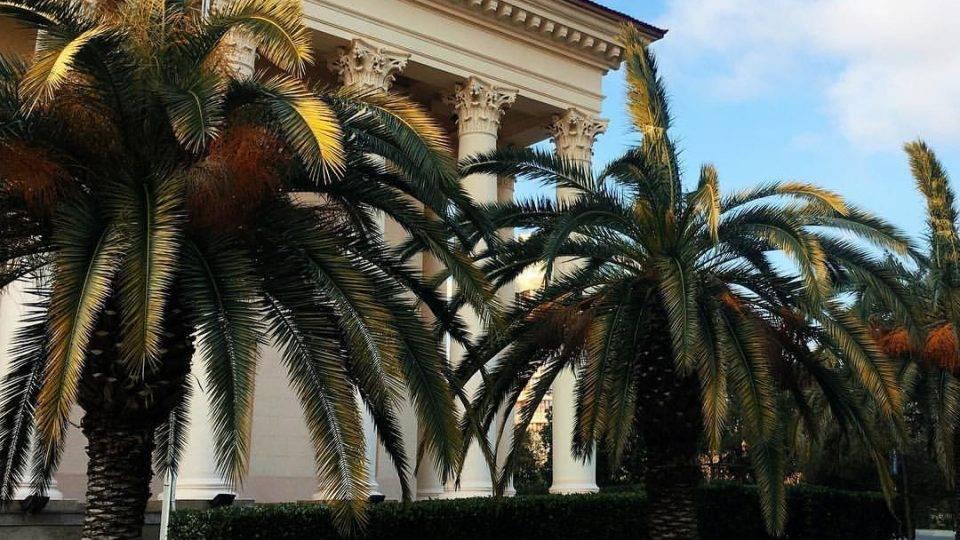 Пальмы в России