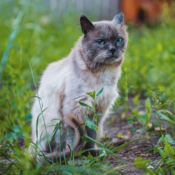 кошачье гетто